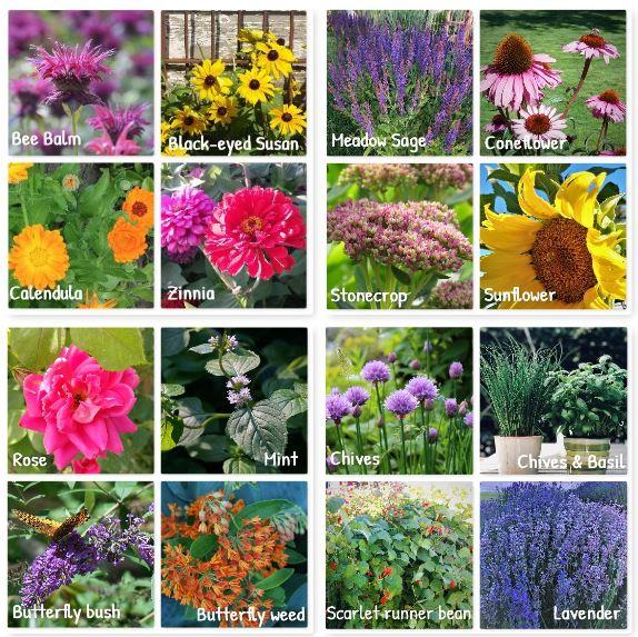 Bee flower chart2
