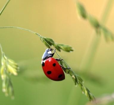 Bee lady bug